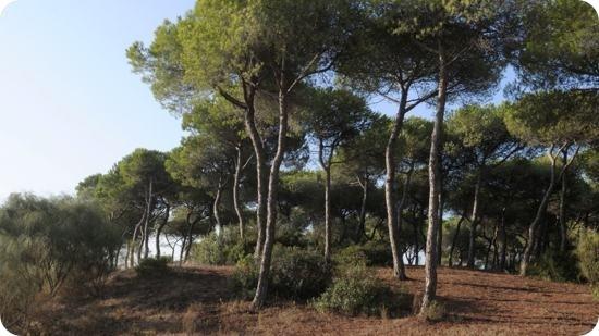 Dunas de S. Antón
